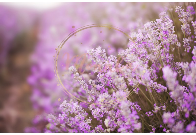 Close up of lavender. Blurred background. Lavender fields. Vintage tinted, Selective focus - DIGITAL DOWNLOAD PHOTOGRAPHY