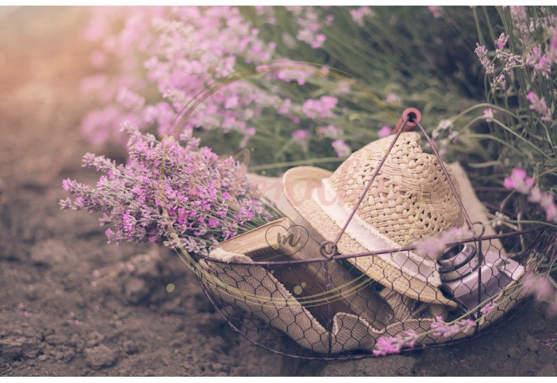 Basket with lavender bouquet, old antique camera and ball with twine. Lavender flowers between rows of lavender field. Purple tinting, sunny hazy, haze - DIGITAL DOWNLOAD PHOTOGRAPHY