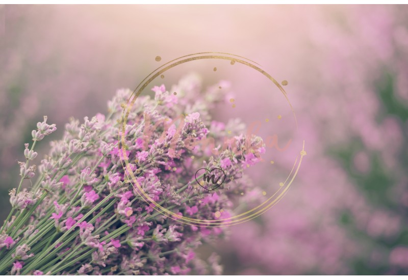 Close up of lavender. Blurred background. Lavender fields - DIGITAL DOWNLOAD PHOTOGRAPHY