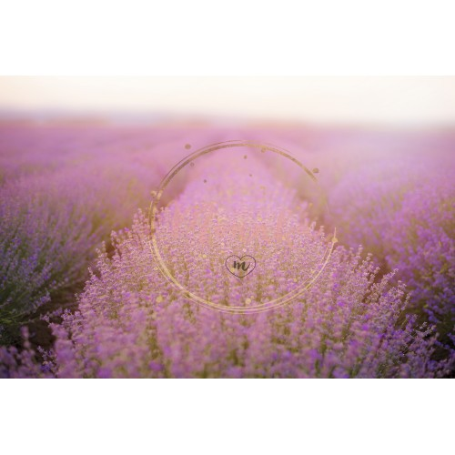Close up of lavender. Lavender Fields. Rows Of Lavender Plants Blossoming. Vintage filter tinted, sun haze, glare - DIGITAL DOWNLOAD PHOTOGRAPHY