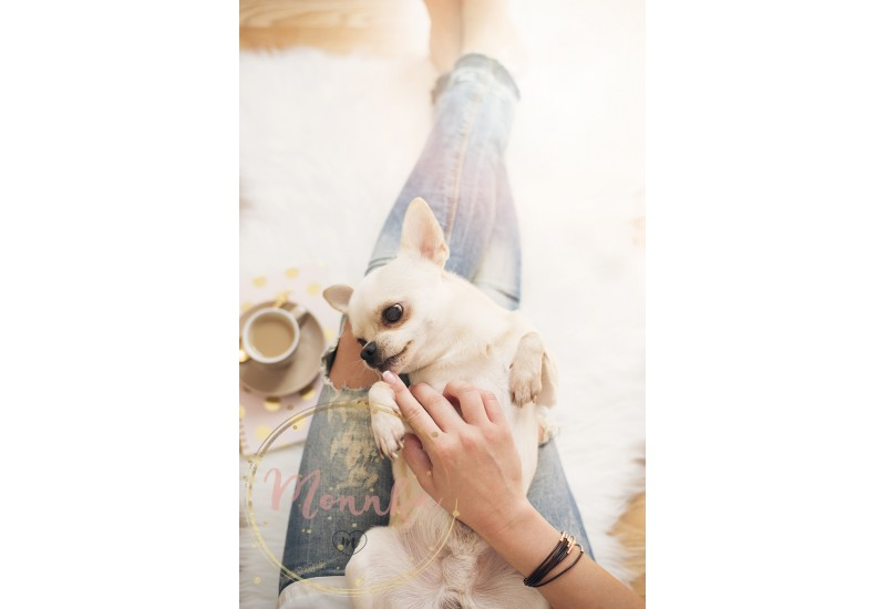 A young woman wearing distressed jeans sitting on wood floor on a white fur carpet at home and caressing a cute Chihuahua dog. Gold bright feminine theme - DIGITAL DOWNLOAD PHOTOGRAPHY